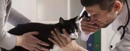 New Client Testimonial: Veterinary Business Development